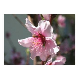 Close Up of Peach Tree Blossom Custom Announcements