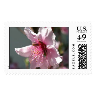 Close Up of Peach Tree Blossom Stamps