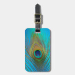 Close up of peacock feather luggage tag