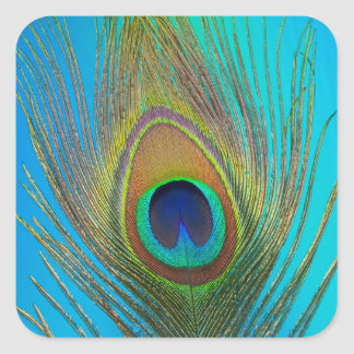 Close up of peacock feather square sticker