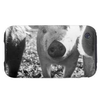 Close up of piglets iPhone 3 tough cases