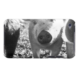 Close up of piglets iPod touch cover