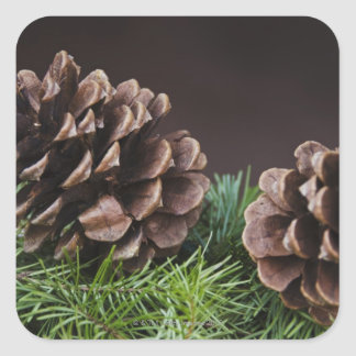 Close-up of pine cone square sticker