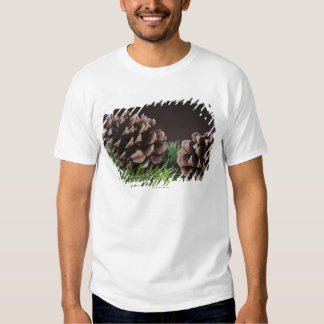 Close-up of pine cone t-shirt