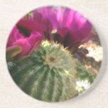Close Up of Pink Cactus Flowers Beverage Coasters