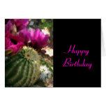 Close Up of Pink Cactus Flowers Cards