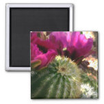 Close Up of Pink Cactus Flowers Refrigerator Magnets