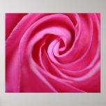 Close up of pink rose poster