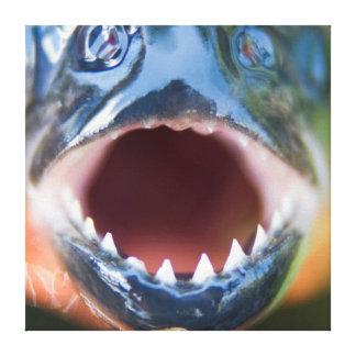 Close-Up Of Piranha, Iquitos, Maynas, Peru Canvas Print