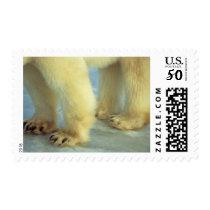 Close up of Polar Bear Feet Postage