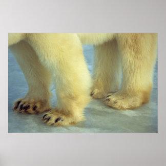 Close up of Polar Bear Feet Poster