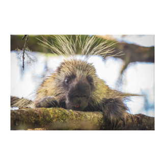Close-up of porcupine in a tree canvas print