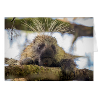 Close-up of porcupine in a tree card