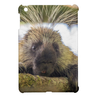 Close-up of porcupine in a tree cover for the iPad mini
