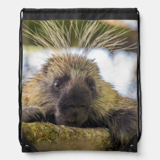 Close-up of porcupine in a tree drawstring backpack