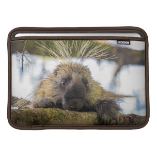 Close-up of porcupine in a tree sleeve for MacBook air