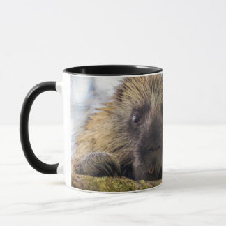 Close-up of porcupine in a tree mug
