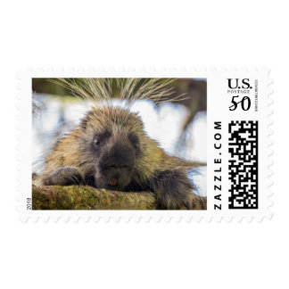 Close-up of porcupine in a tree postage
