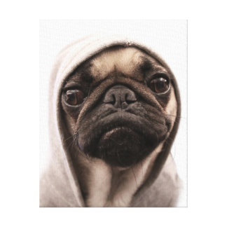 Close up of pug wearing hoodie. canvas print