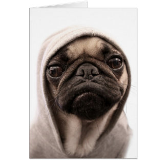Close up of pug wearing hoodie. greeting card