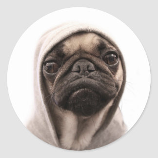 Close up of pug wearing hoodie. classic round sticker
