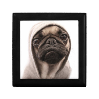 Close up of pug wearing hoodie. gift box