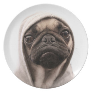 Close up of pug wearing hoodie. plate
