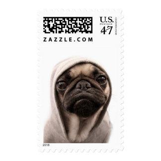 Close up of pug wearing hoodie. stamp