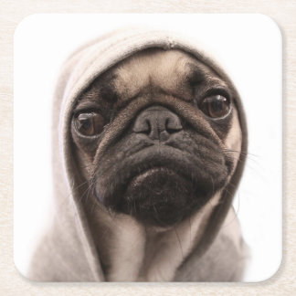 Close up of pug wearing hoodie. square paper coaster