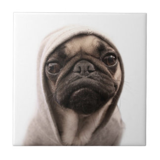 Close up of pug wearing hoodie. small square tile