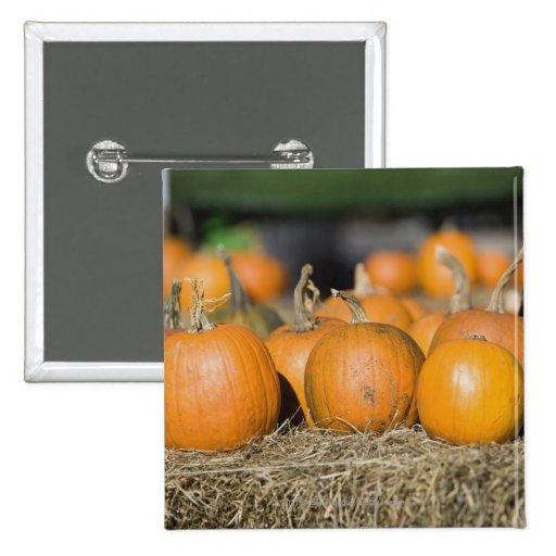 Close-up of pumpkins buttons