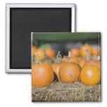 Close-up of pumpkins fridge magnet