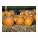 Close-up of pumpkins postcard