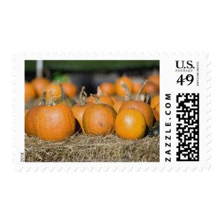 Close-up of pumpkins stamps