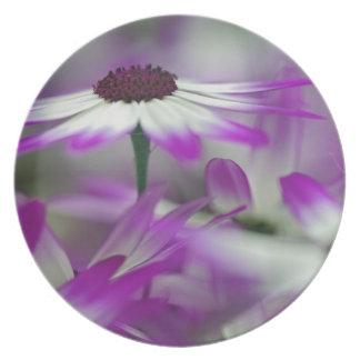 Close-up of purple flower, Keukenhof Garden, Party Plates