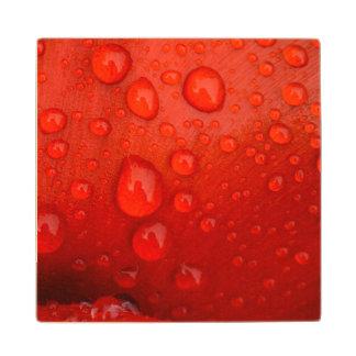 Close-up of raindrops on tulip petal wood coaster