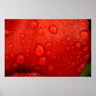Close-up of raindrops on tulip petal print