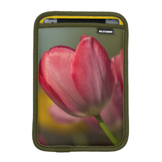 Close-up of red and yellow tulips in garden sleeve for iPad mini