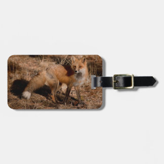 Close-up of red fox luggage tag