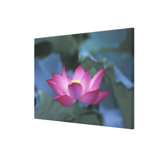 Close-up of red lotus flower and green leaves, canvas print