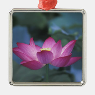Close-up of red lotus flower and green leaves, square metal christmas ornament