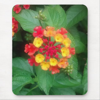 Close-up of Red, Orange, and Yellow Lantana Flower Mouse Pad