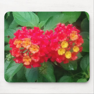 Close-up of Red, Orange, and Yellow Lantana Mouse Pad
