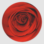 Close up of red rose classic round sticker
