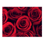 Close up of red rose flowers. postcard