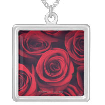 Close up of red rose flowers. silver plated necklace
