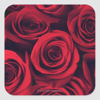 Close up of red rose flowers. square sticker