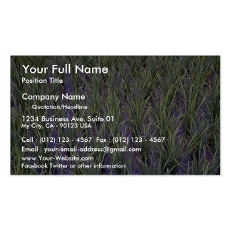 Close-up of rice paddy, Indonesia at the Cornish R Business Card