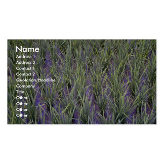 Close-up of rice paddy, Indonesia at the Cornish R Business Card Template