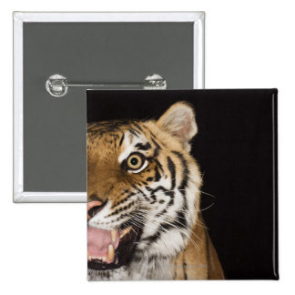 Close up of roaring tiger's face pin